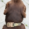 Multicam Dog Collar
